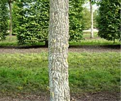 boom maximaal 2 meter hoog